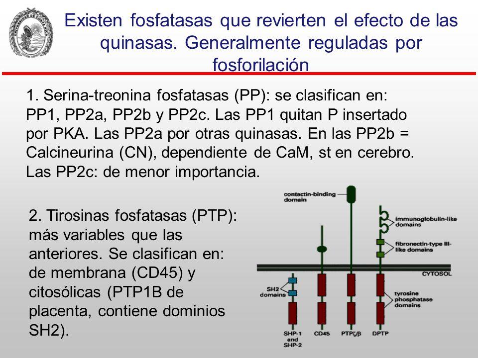 Existen fosfatasas que revierten el efecto de las quinasas
