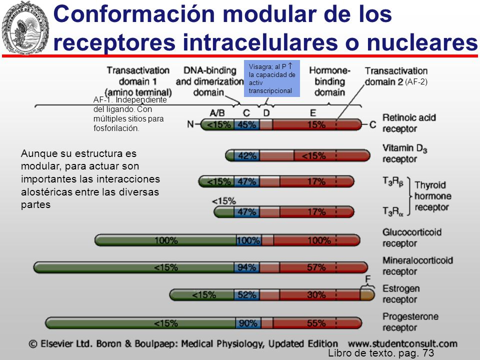 Conformación modular de los receptores intracelulares o nucleares