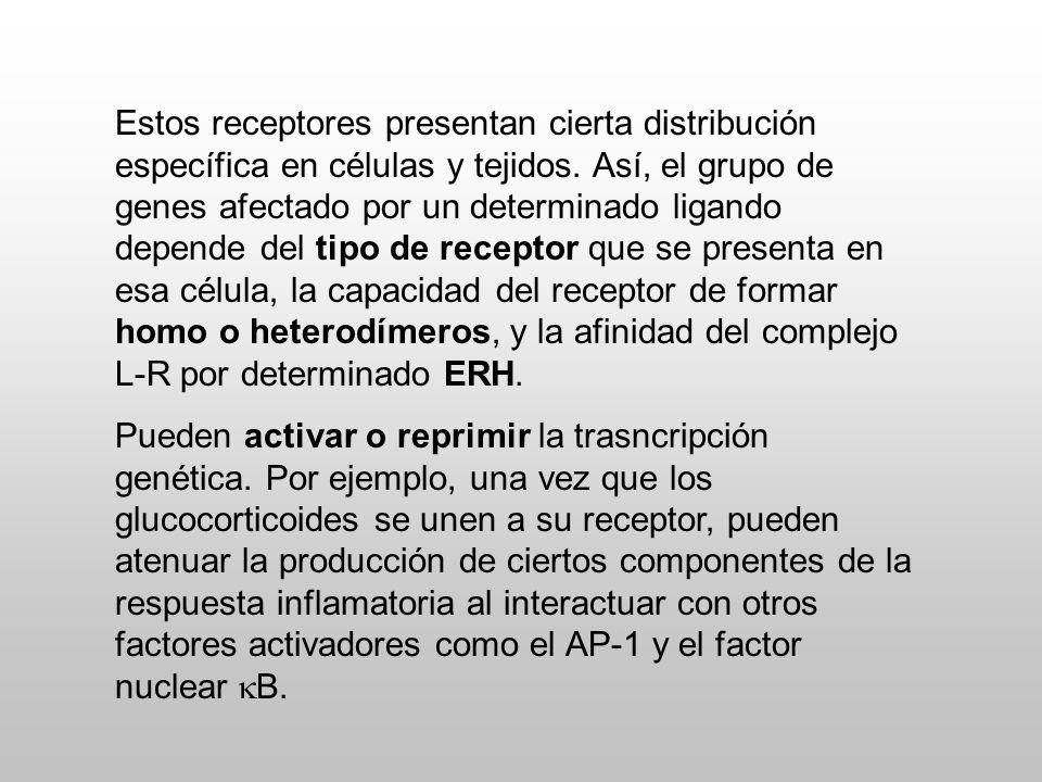 Estos receptores presentan cierta distribución específica en células y tejidos. Así, el grupo de genes afectado por un determinado ligando depende del tipo de receptor que se presenta en esa célula, la capacidad del receptor de formar homo o heterodímeros, y la afinidad del complejo L-R por determinado ERH.