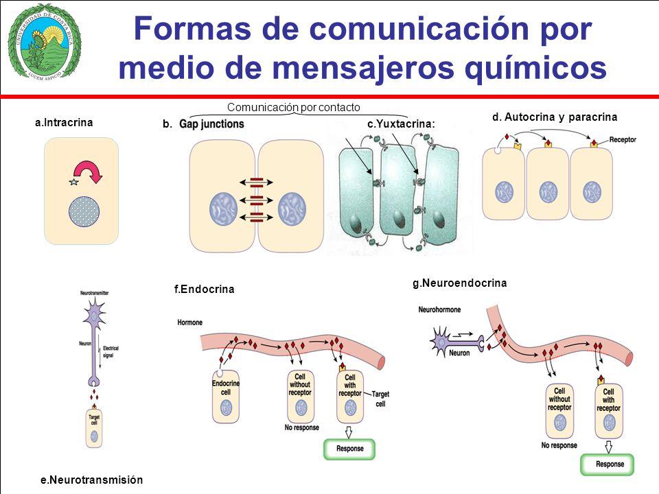 Formas de comunicación por medio de mensajeros químicos