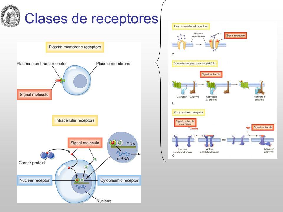 Clases de receptores