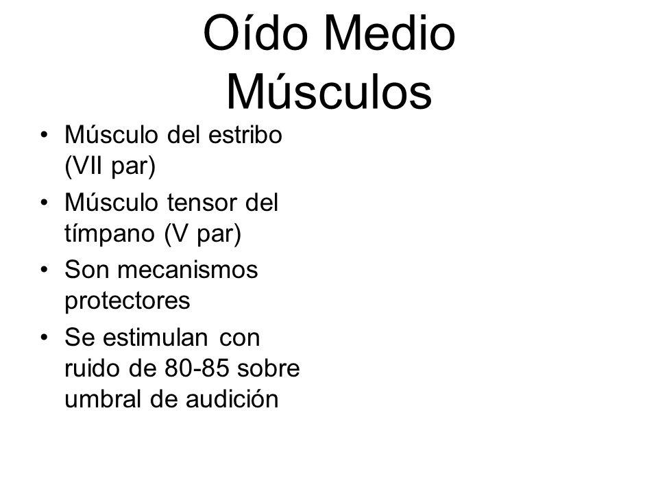 Oído Medio Músculos Músculo del estribo (VII par)