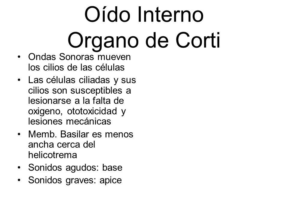 Oído Interno Organo de Corti