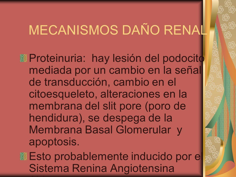 MECANISMOS DAÑO RENAL