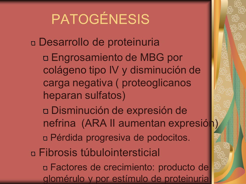 PATOGÉNESIS Desarrollo de proteinuria Fibrosis túbulointersticial