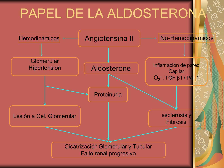 PAPEL DE LA ALDOSTERONA