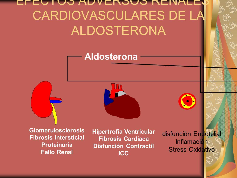 EFECTOS ADVERSOS RENALES Y CARDIOVASCULARES DE LA ALDOSTERONA