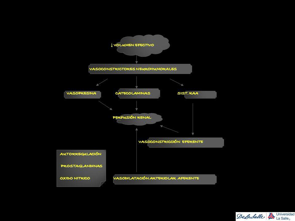 ↓ VOLUMEN EFECTIVO VASOCONSTRICTORES NEUROHUMORALES. VASOPRESINA CATECOLAMINAS SIST. RAA.