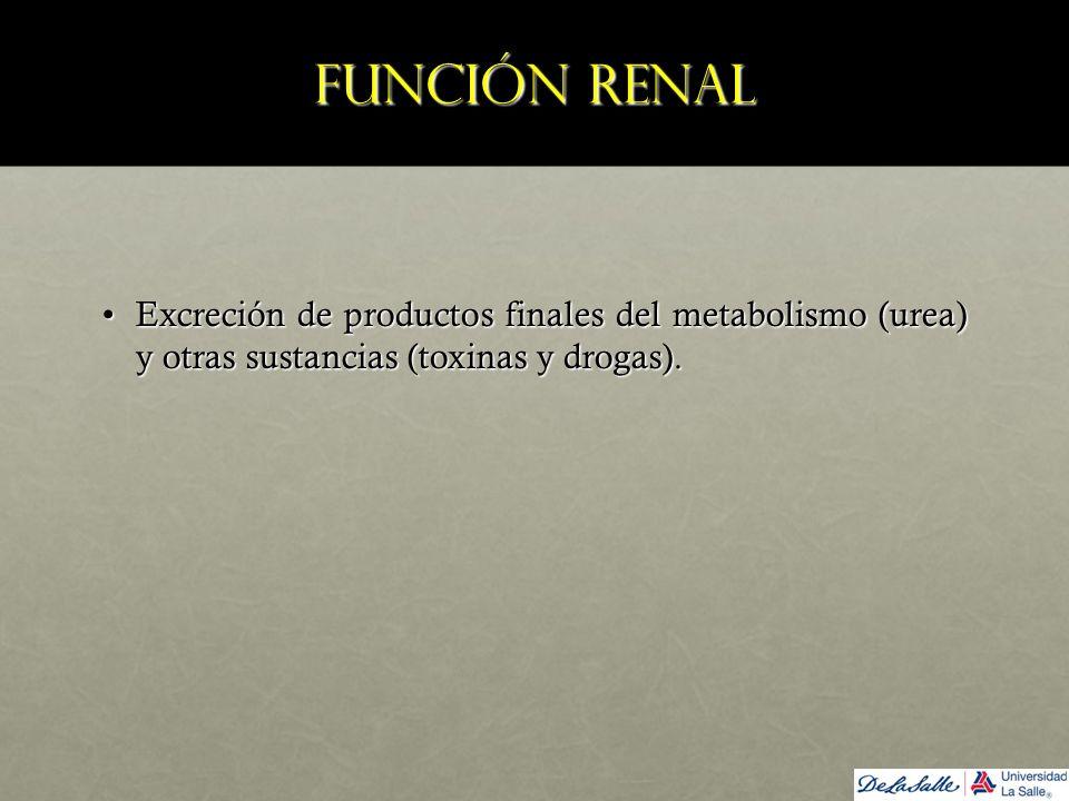 Función renal Excreción de productos finales del metabolismo (urea) y otras sustancias (toxinas y drogas).