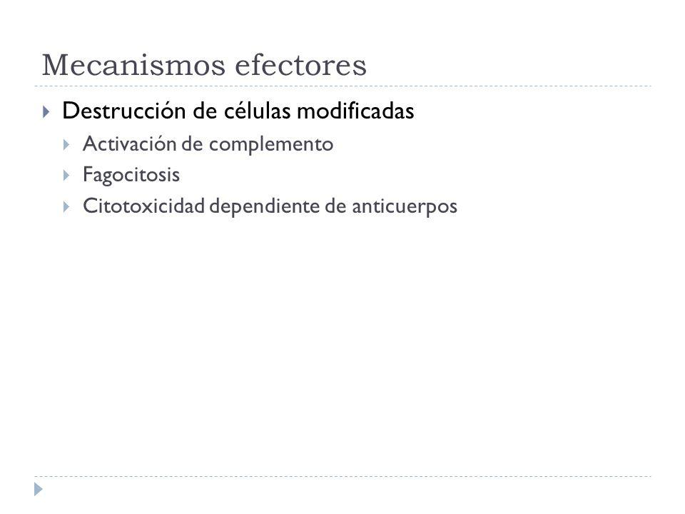 Mecanismos efectores Destrucción de células modificadas