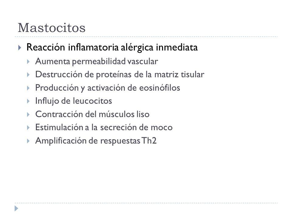 Mastocitos Reacción inflamatoria alérgica inmediata