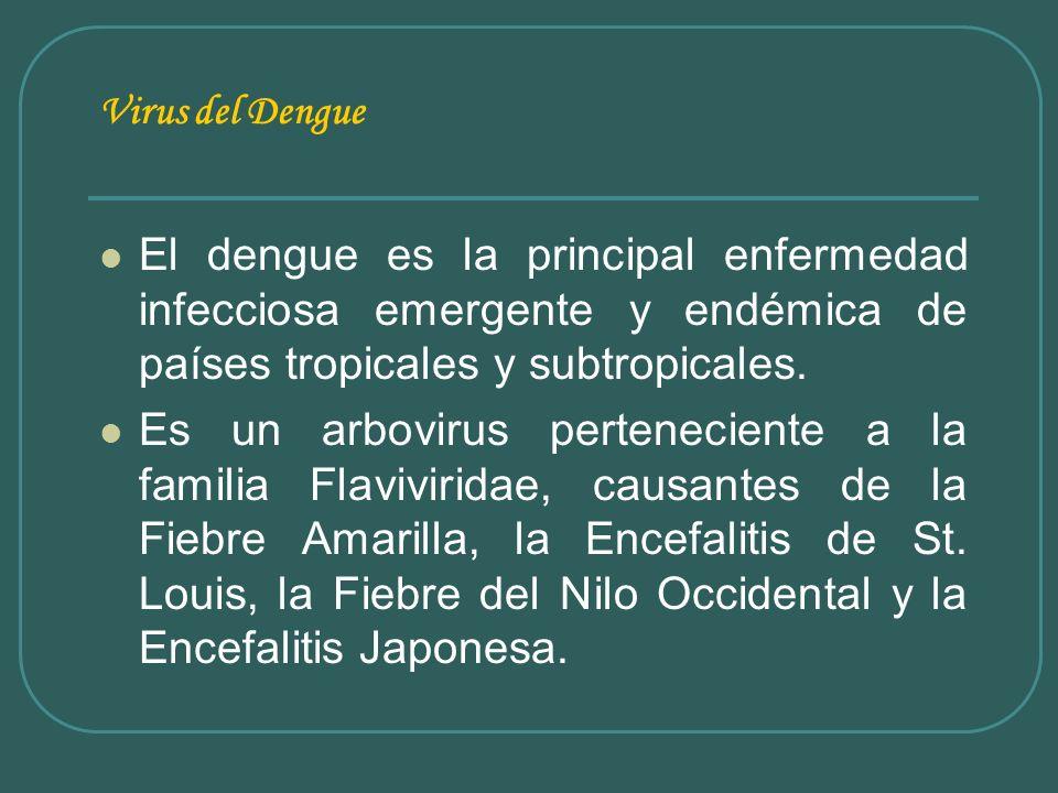 Virus del Dengue El dengue es la principal enfermedad infecciosa emergente y endémica de países tropicales y subtropicales.