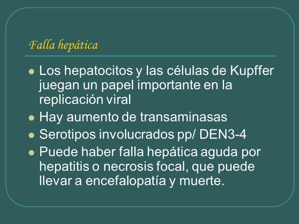 Falla hepática Los hepatocitos y las células de Kupffer juegan un papel importante en la replicación viral.