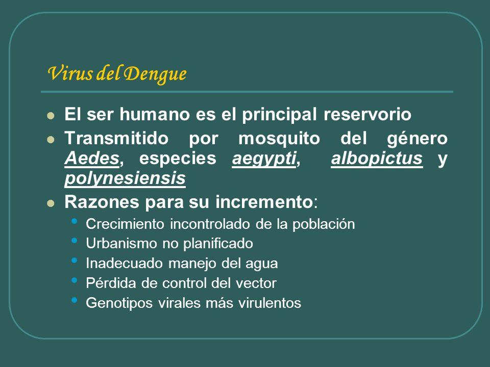 Virus del Dengue El ser humano es el principal reservorio
