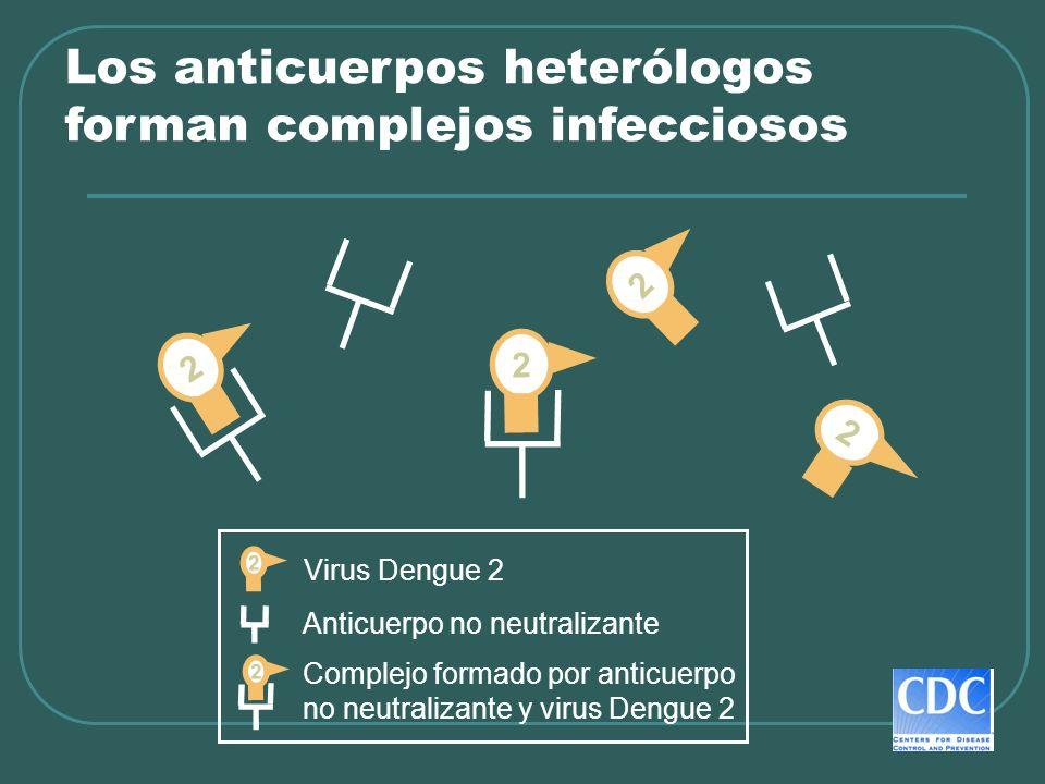 Los anticuerpos heterólogos forman complejos infecciosos