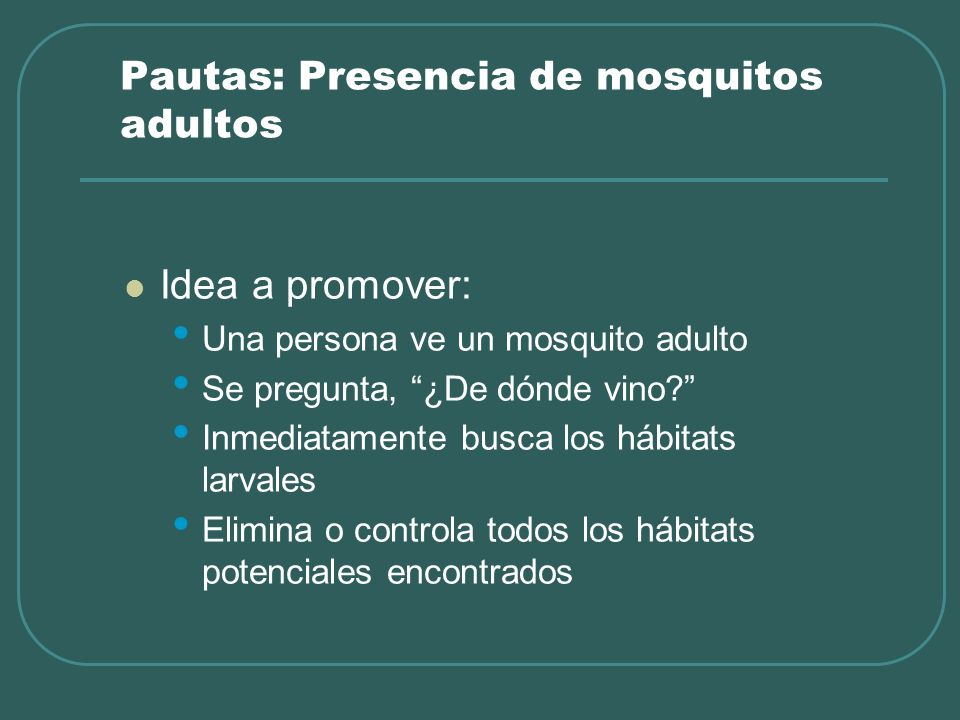 Pautas: Presencia de mosquitos adultos