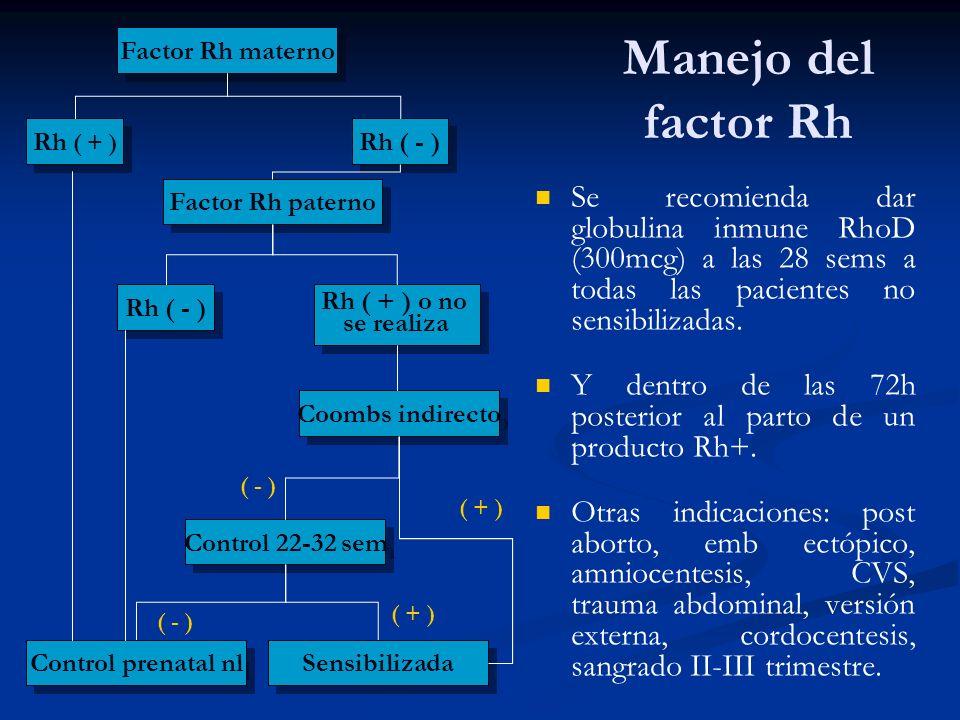 Factor Rh materno Manejo del factor Rh. Rh ( + ) Rh ( - ) Factor Rh paterno.