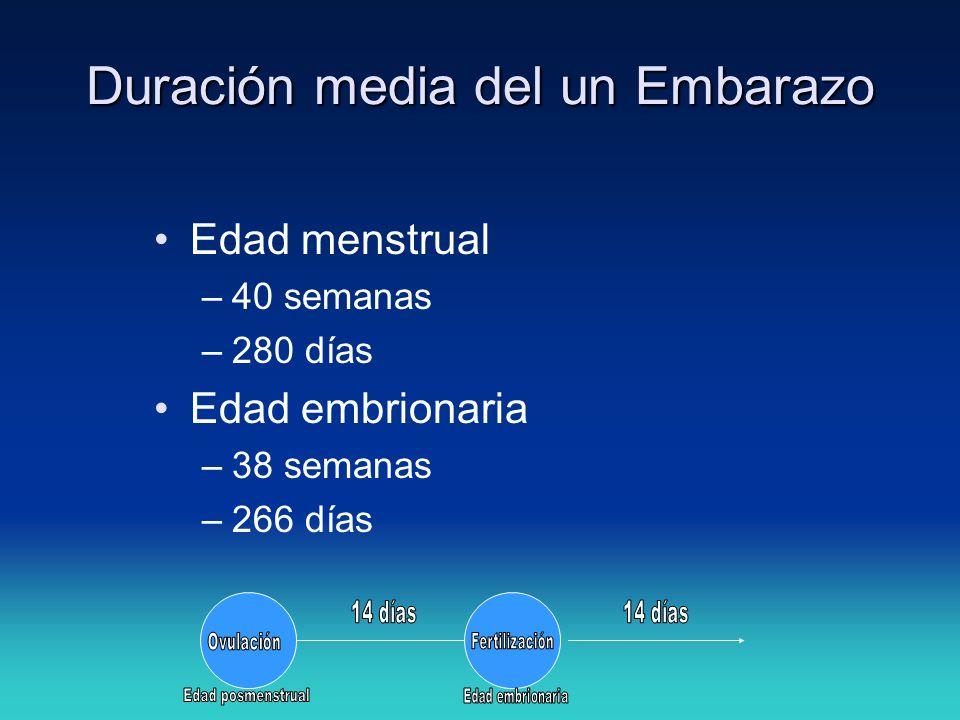Duración media del un Embarazo