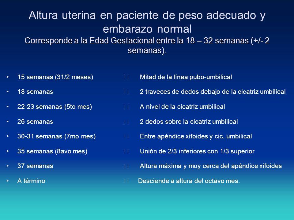 Altura uterina en paciente de peso adecuado y embarazo normal Corresponde a la Edad Gestacional entre la 18 – 32 semanas (+/- 2 semanas).