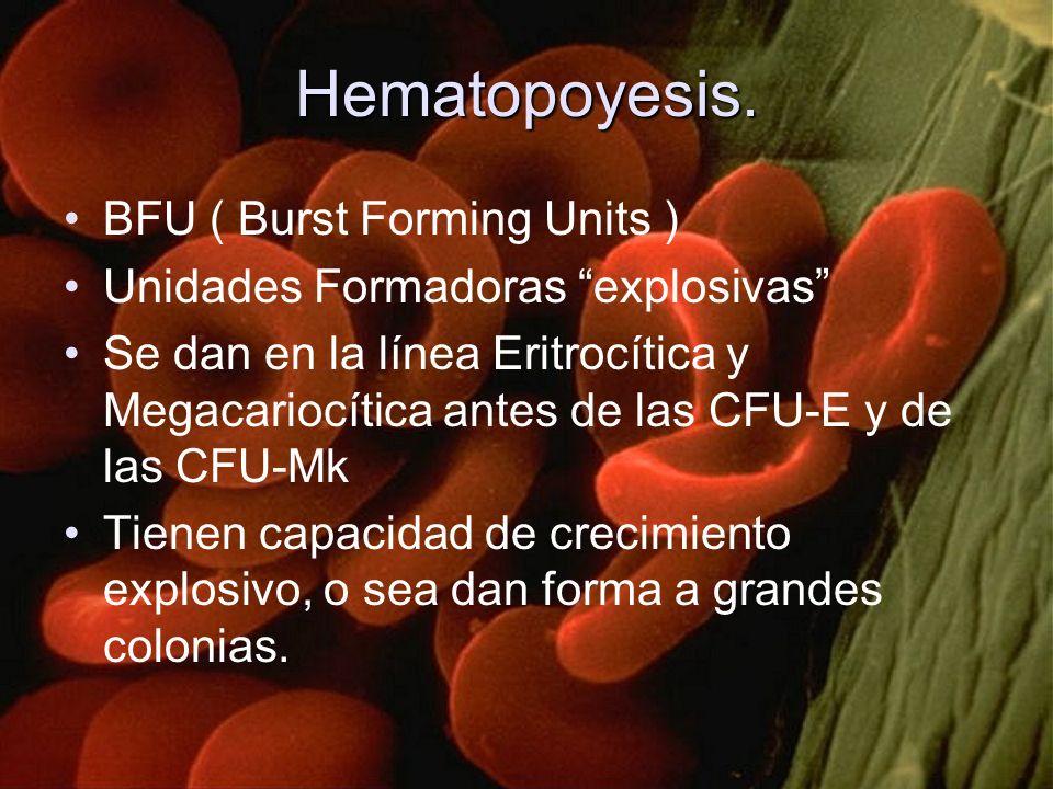 Hematopoyesis. BFU ( Burst Forming Units )