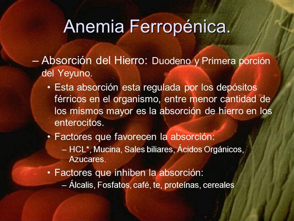 Anemia Ferropénica. Absorción del Hierro: Duodeno y Primera porción del Yeyuno.