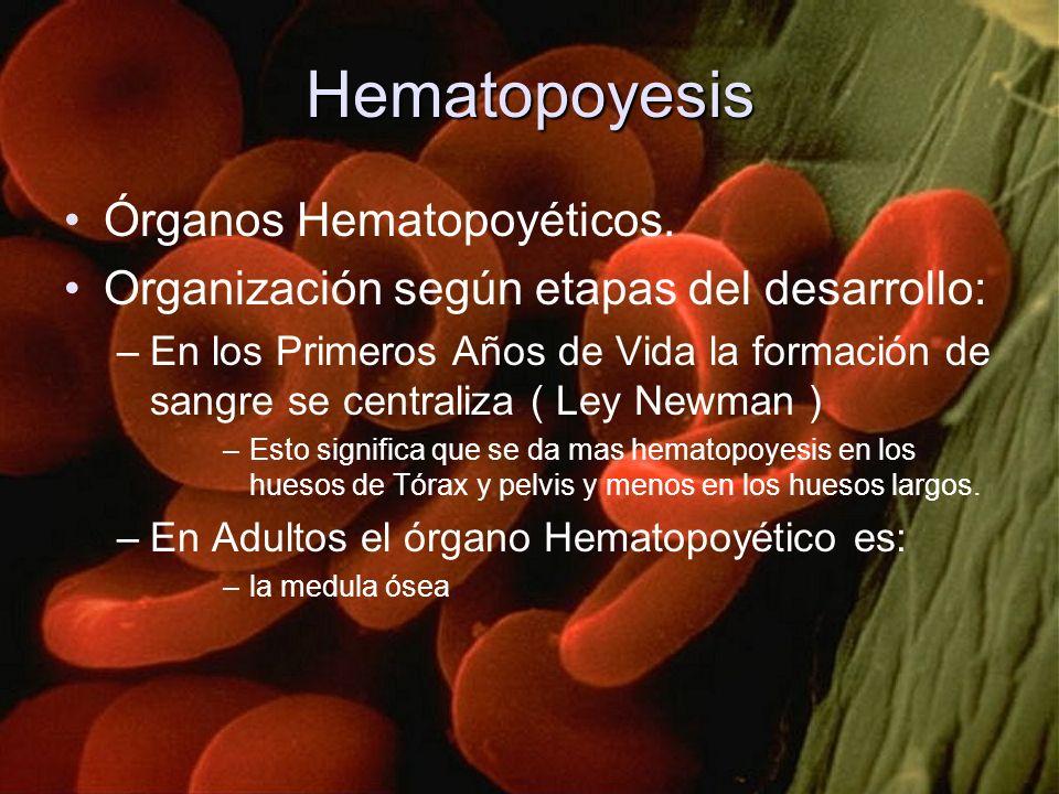 Hematopoyesis Órganos Hematopoyéticos.