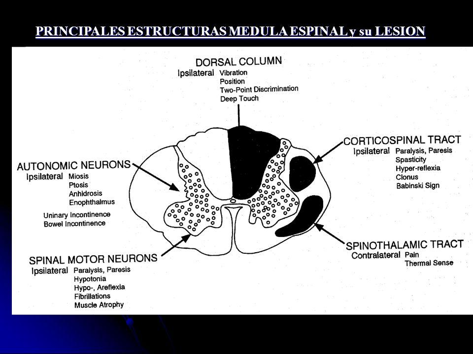 PRINCIPALES ESTRUCTURAS MEDULA ESPINAL y su LESION