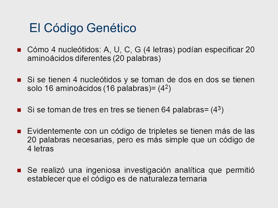 El Código Genético Cómo 4 nucleótidos: A, U, C, G (4 letras) podían especificar 20 aminoácidos diferentes (20 palabras)