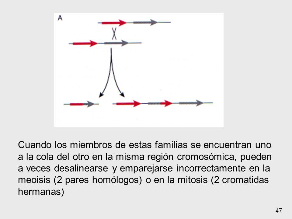 Cuando los miembros de estas familias se encuentran uno a la cola del otro en la misma región cromosómica, pueden a veces desalinearse y emparejarse incorrectamente en la meoisis (2 pares homólogos) o en la mitosis (2 cromatidas hermanas)