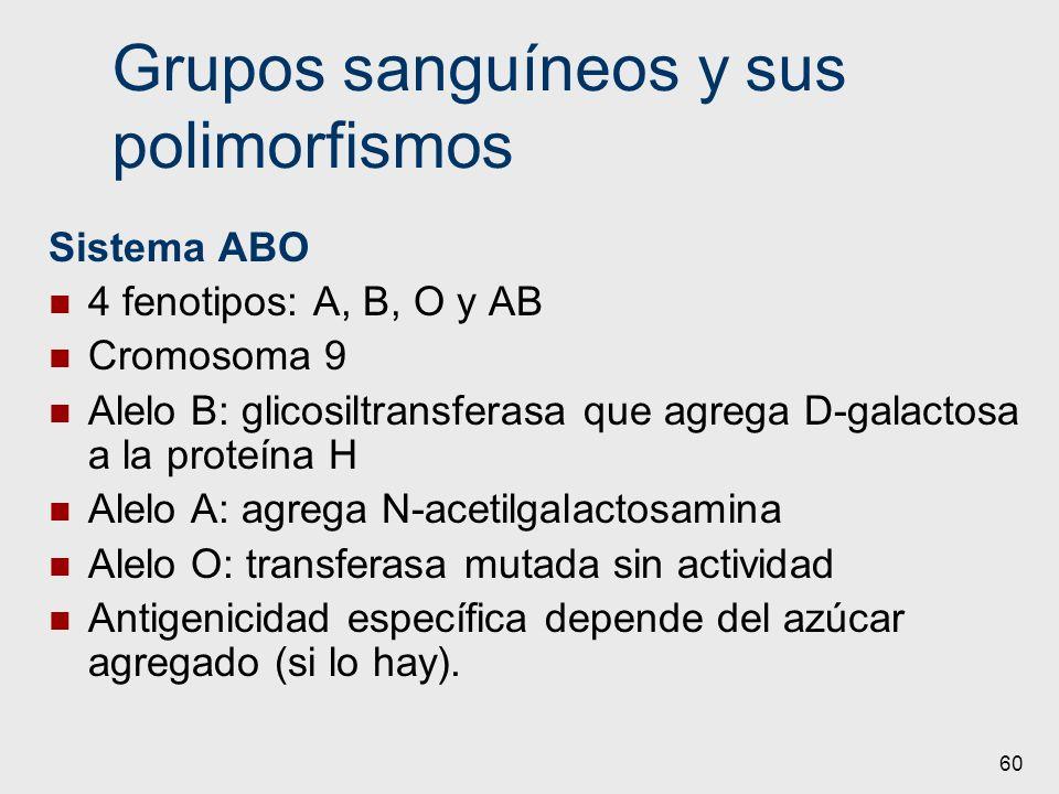 Grupos sanguíneos y sus polimorfismos