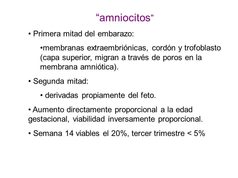 amniocitos Primera mitad del embarazo: