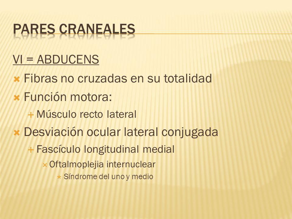 PARES CRANEALES VI = ABDUCENS Fibras no cruzadas en su totalidad