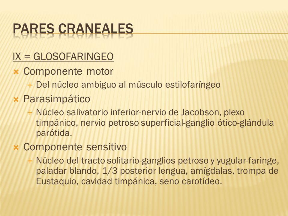 PARES CRANEALES IX = GLOSOFARINGEO Componente motor Parasimpático