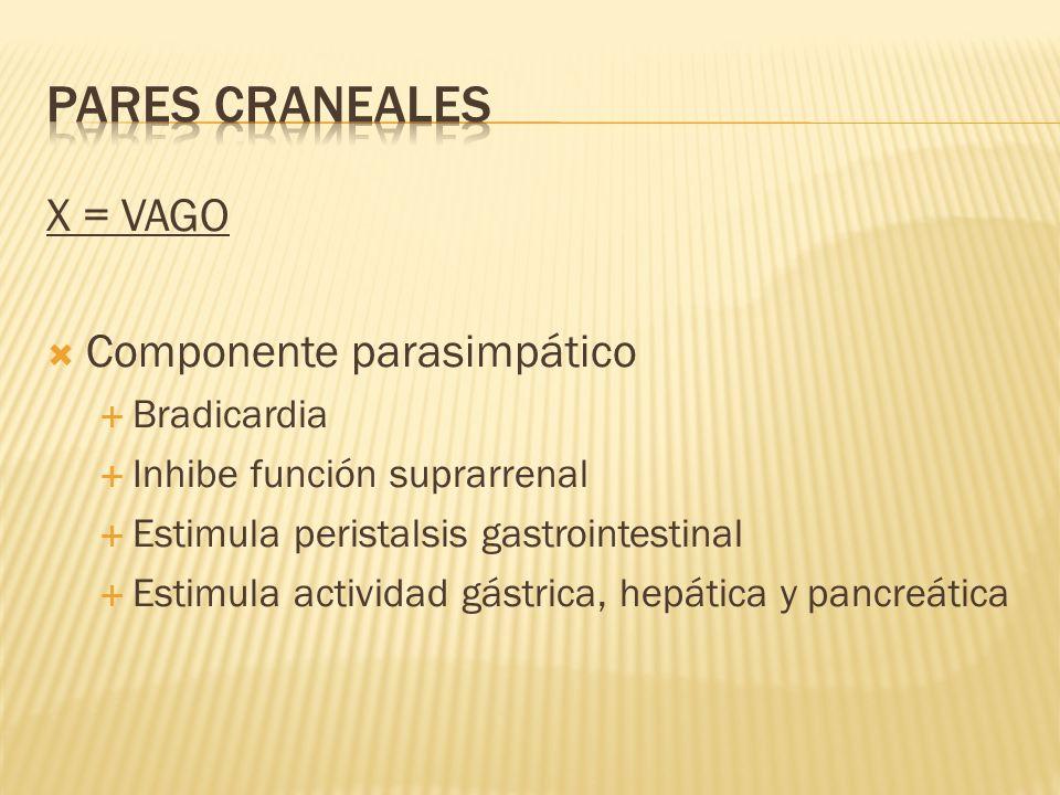 PARES CRANEALES X = VAGO Componente parasimpático Bradicardia