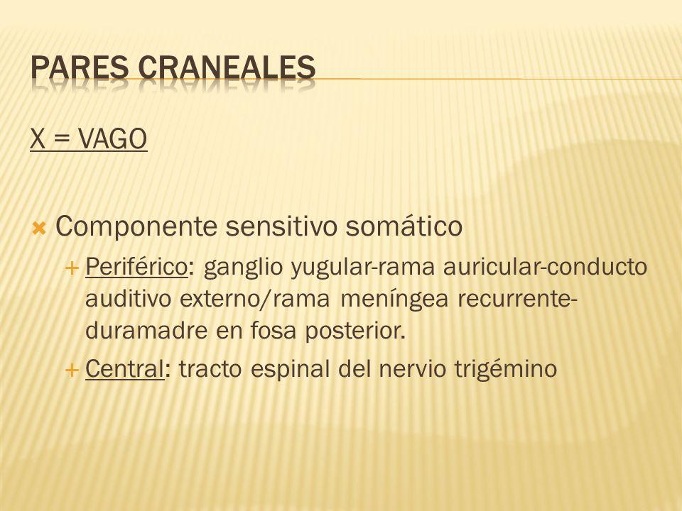 PARES CRANEALES X = VAGO Componente sensitivo somático