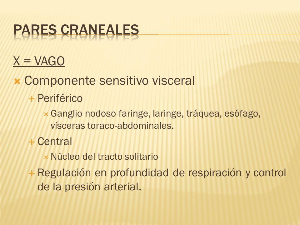 PARES CRANEALES X = VAGO Componente sensitivo visceral Periférico