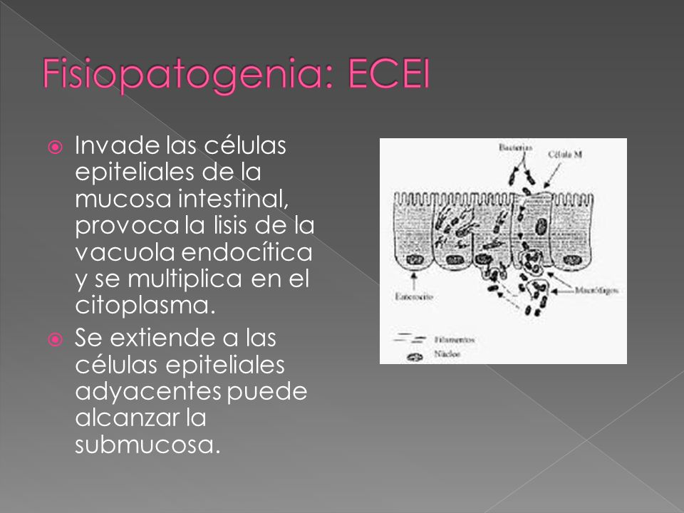Fisiopatogenia: ECEI