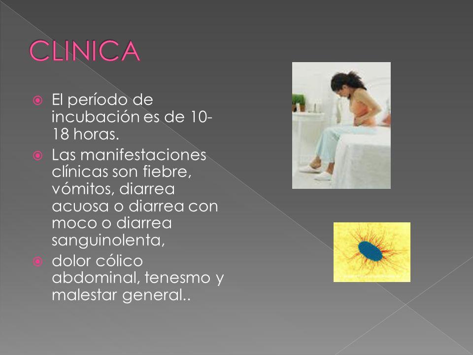 CLINICA El período de incubación es de 10-18 horas.