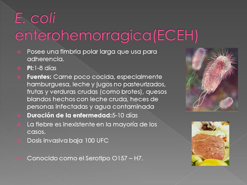 E. coli enterohemorragica(ECEH)