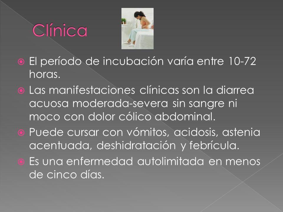Clínica El período de incubación varía entre 10-72 horas.