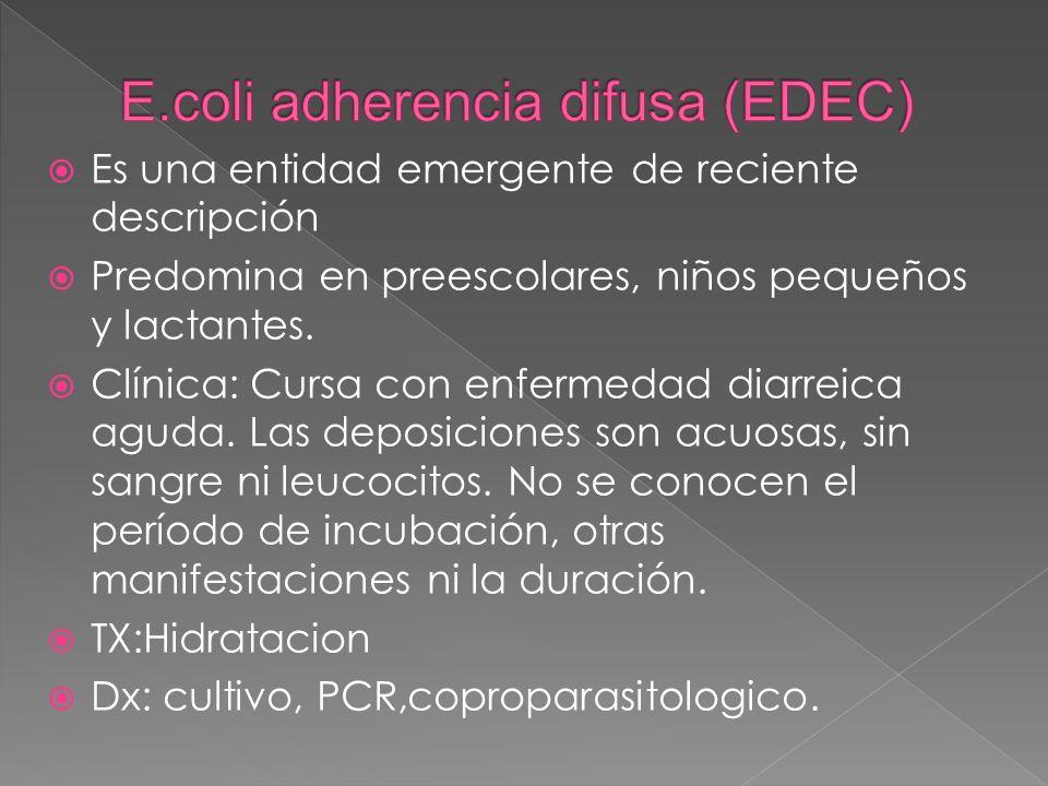 E.coli adherencia difusa (EDEC)