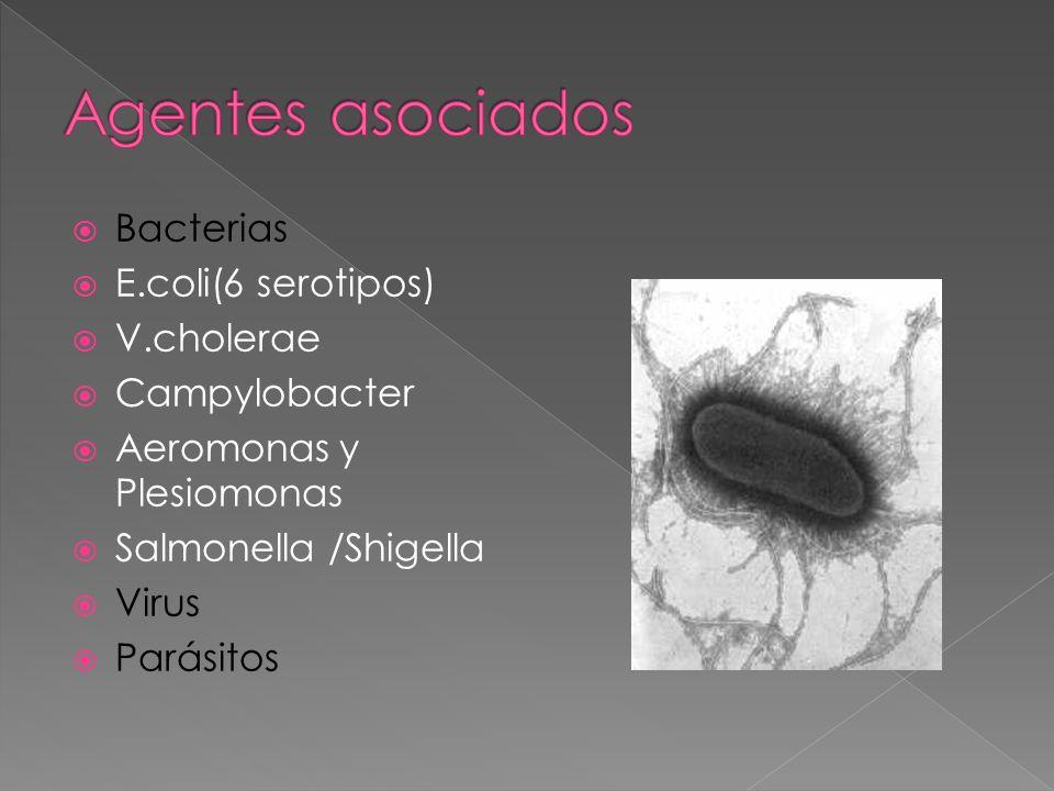 Agentes asociados Bacterias E.coli(6 serotipos) V.cholerae