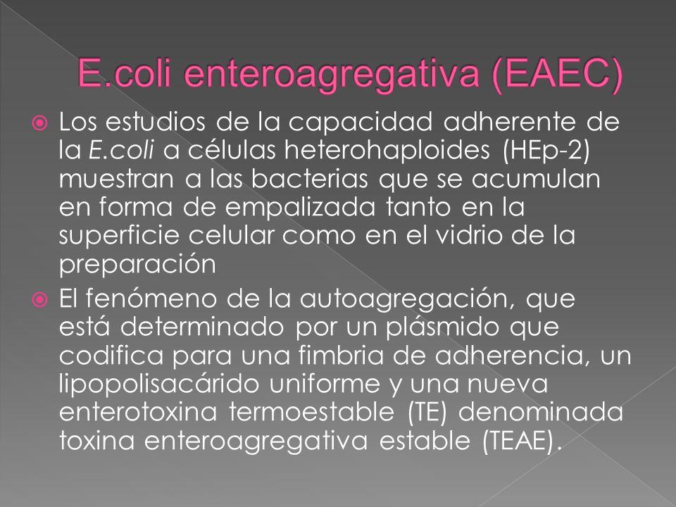 E.coli enteroagregativa (EAEC)