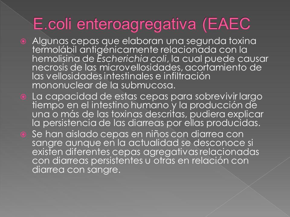 E.coli enteroagregativa (EAEC