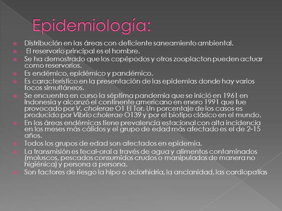Epidemiología: Distribución en las áreas con deficiente saneamiento ambiental. El reservorio principal es el hombre.