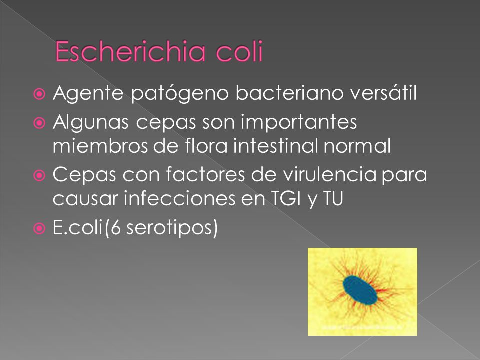 Escherichia coli Agente patógeno bacteriano versátil