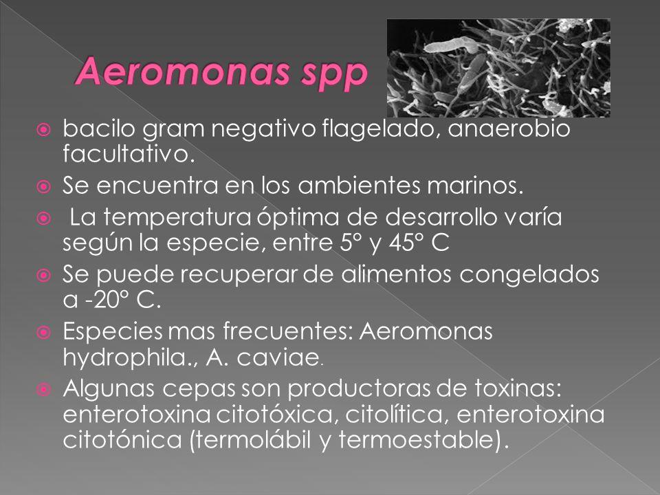 Aeromonas spp bacilo gram negativo flagelado, anaerobio facultativo.