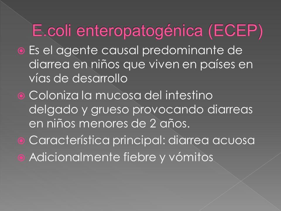 E.coli enteropatogénica (ECEP)