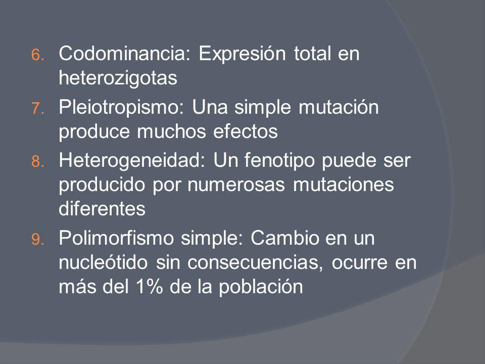 Codominancia: Expresión total en heterozigotas