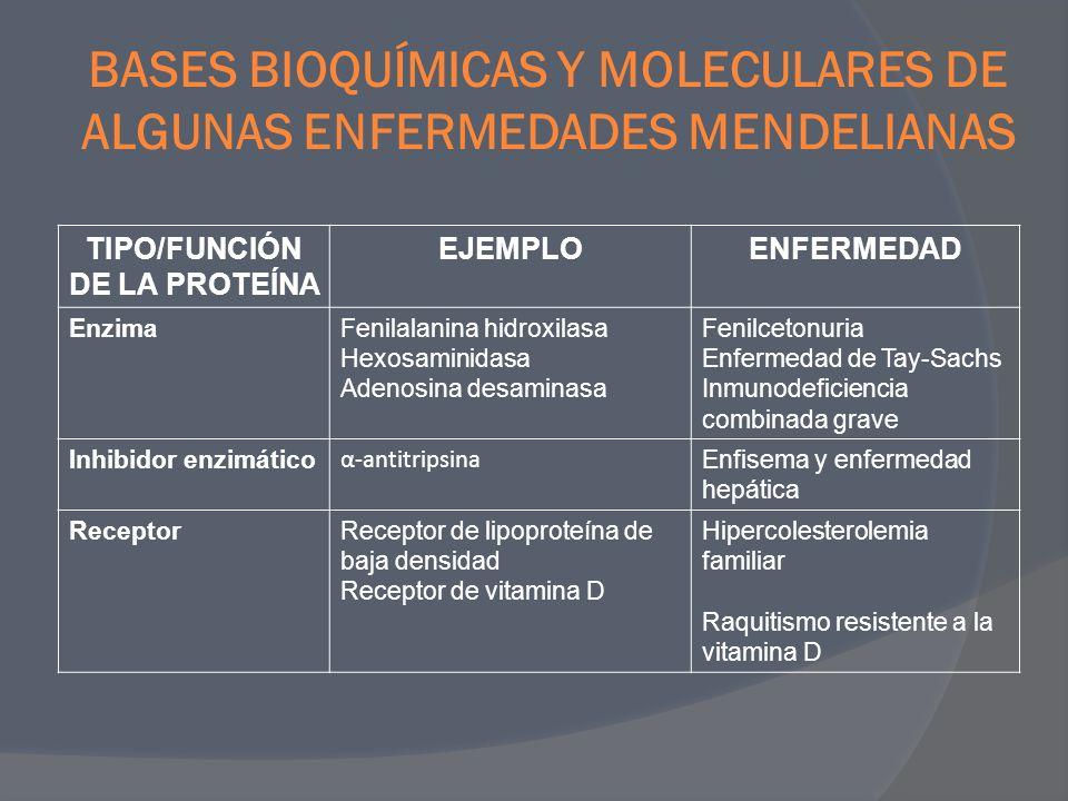 BASES BIOQUÍMICAS Y MOLECULARES DE ALGUNAS ENFERMEDADES MENDELIANAS